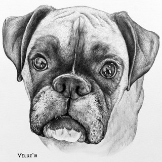 Casey The Talking Dog - 8.5x11in Drawing