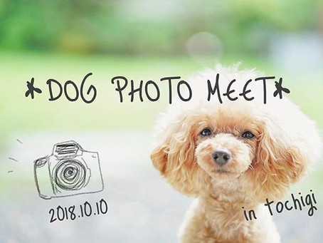 10月10日*DOG PHOTO MEET*のお知らせです