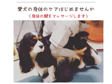 2021年8月1日(日)愛犬の身体のマッサージケア 開催