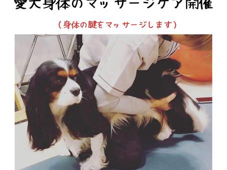 8月19日(木)好評につき 平日も開催!愛犬身体のマッサージケア開催
