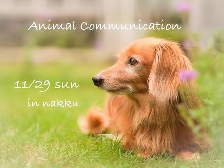 アニマルコミュニケーション開催のお知らせ