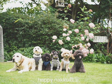 9月~12月happy nakku教室開催のお知らせです