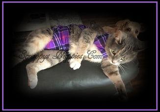 Scrappy's Nappies Custom Made Cat Diaper