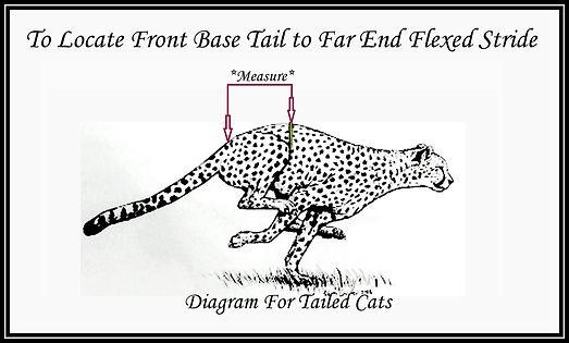 Far Flexed Stride Tailed Cat