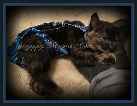 Scrappy's Nappies Custom Cat Diaper