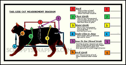 TAILESS CATS MEASUREMENTS DIAGRAM webfit.jpg