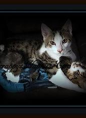 Scrappy's Nappies Custom Made Kitten, Cat, Pet Diaper