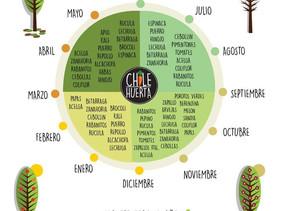 ¿Que plantar según la estación del año?   ¡Anímate a crear tu huerto!