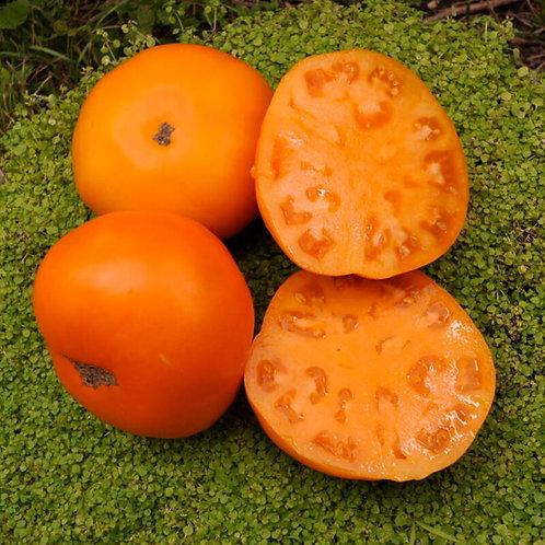 Planton de tomate PERSIMMON