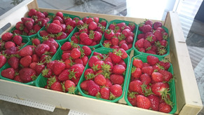 La fraise de saison & du coin, enfin...