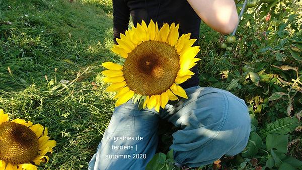 graines de terriens automne 2020