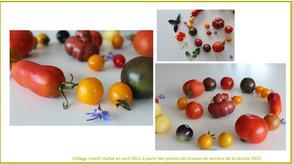 Un panel de variétés pour une palette d'expériences sensorielles