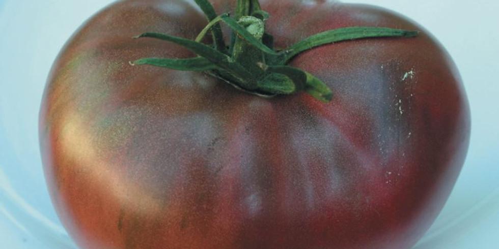 "Planton ""Tomate Charbonneuse"""