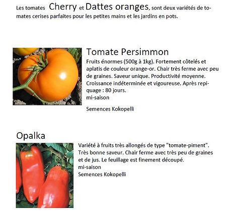 variete tomates 1.JPG