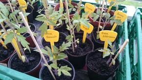 Plantons heureux recherchent jardiniers en herbe