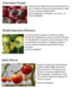 variete tomates 3.JPG