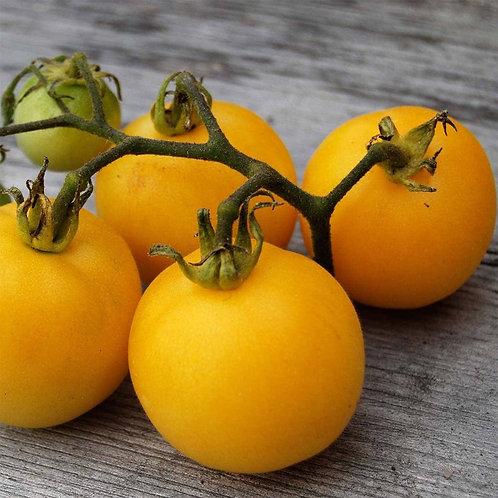 Planton de tomate PÊCHE JAUNE