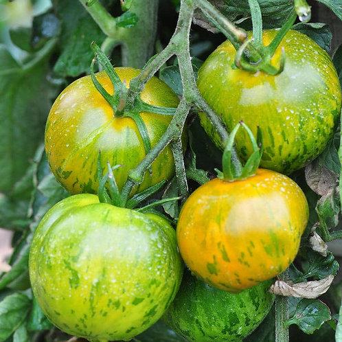 Planton de tomate GREEN ZEBRA