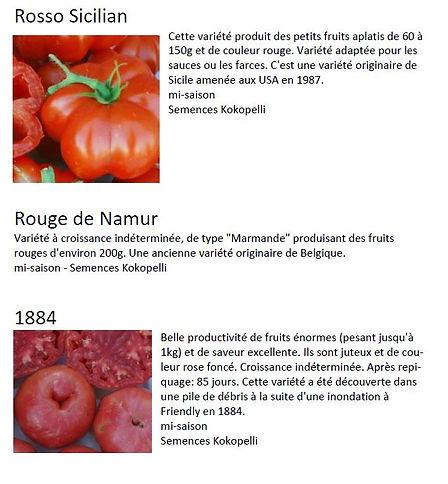 variete tomates 2.JPG