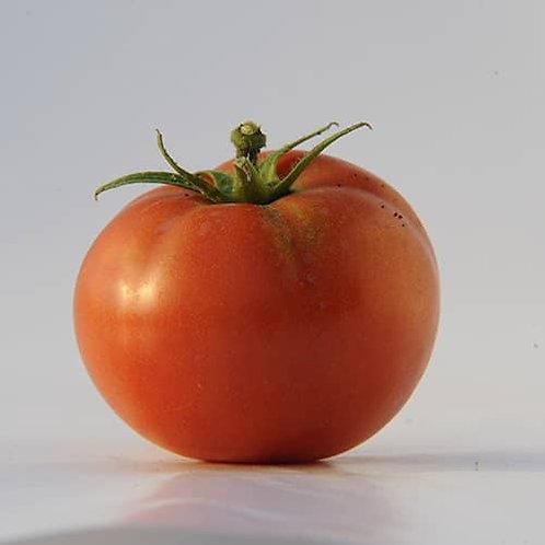 Planton de tomate BUCKBEES'S BEEFSTEAK