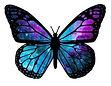 papillon move.JPG