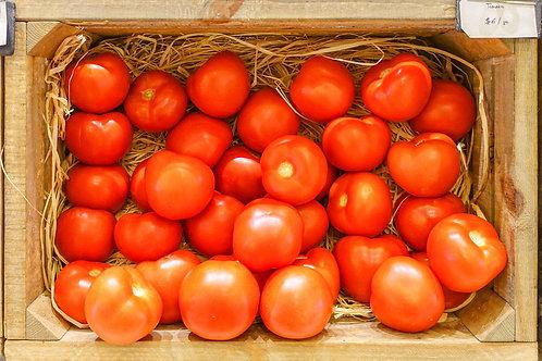 Planton de tomate LONG KEEPER