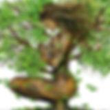Méditation_de_l'arbre.jpg