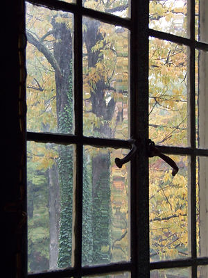 window with trees outside with yellow leaves and green ivy