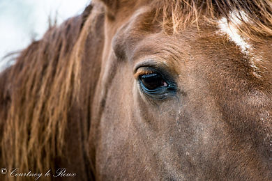 beautiful horse eye