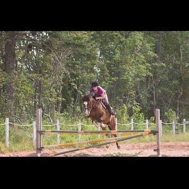 cute jumper paint pony