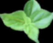 Mamaki Leaf