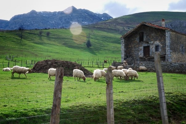asoloma-ovejas