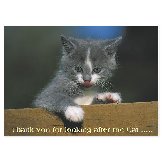 Thank You - Cat - Sold in pack (100 postcards)