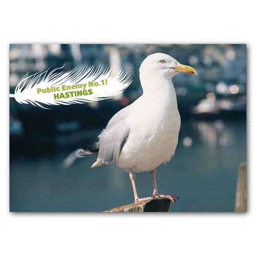 Hastings Seagull - Sold in pack (100 postcards)