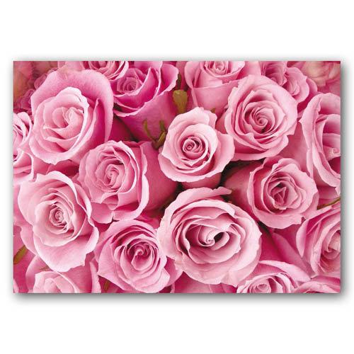 Floral Range Roses - Sold in pack (100 postcards)
