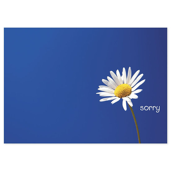 Statement - Sorry - Sold in pack (100 postcards)
