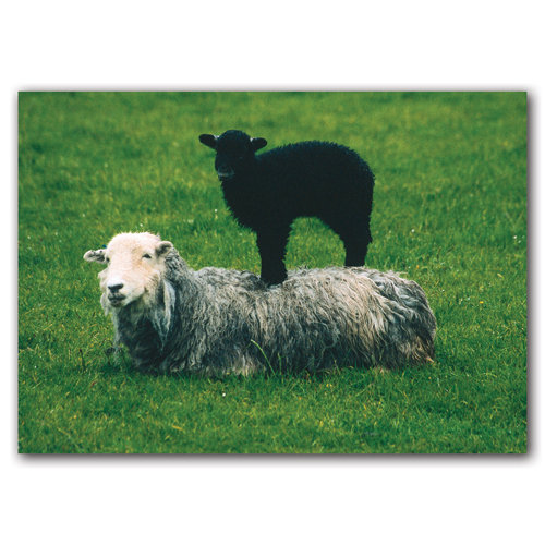 Lamb & Sheep - Sold in pack (100 postcards)