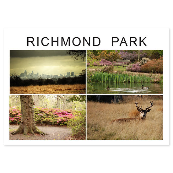 Richmond Park Comp - Sold in pack (100 postcards)