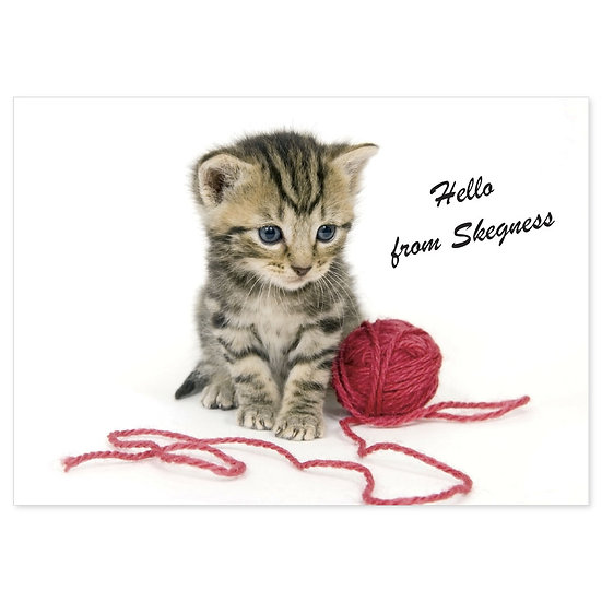 Skegness Hello From (Kitten) - Sold in pack (100 postcards)