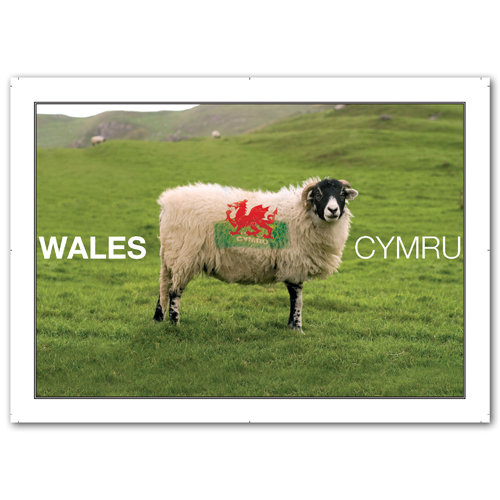 Wales Sheep & Flag - Sold in pack (100 postcards)