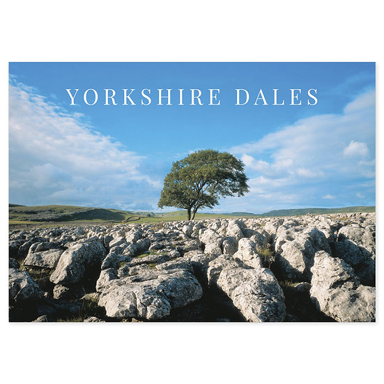 Yorkshire Dales Tree - Sold in pack (100 postcards)