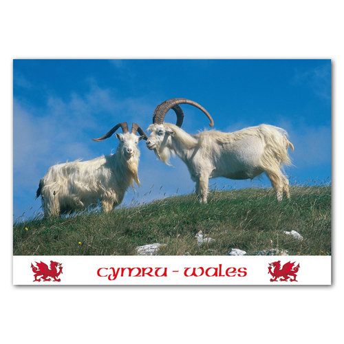 Wales Mountain Goats - Sold in pack (100 postcards)