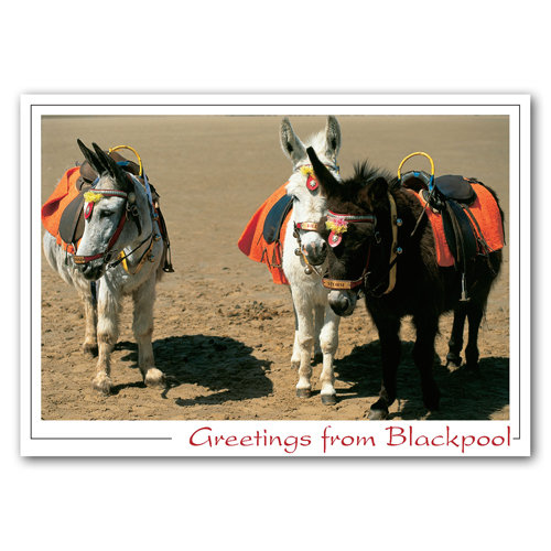 Blackpool Donkeys on Beach - Sold in pack (100 postcards)