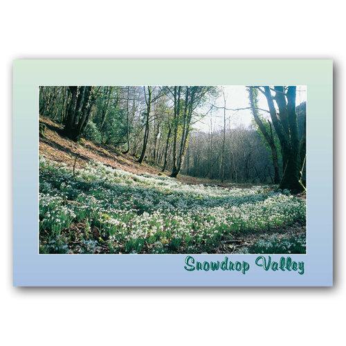 Exmoor Snowdrop Valley - Sold in pack (100 postcards)