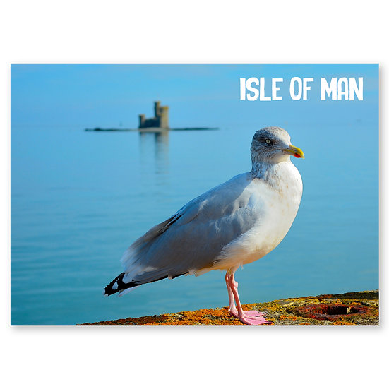 Isle of Man : Seagull - Sold in pack (100 postcards)