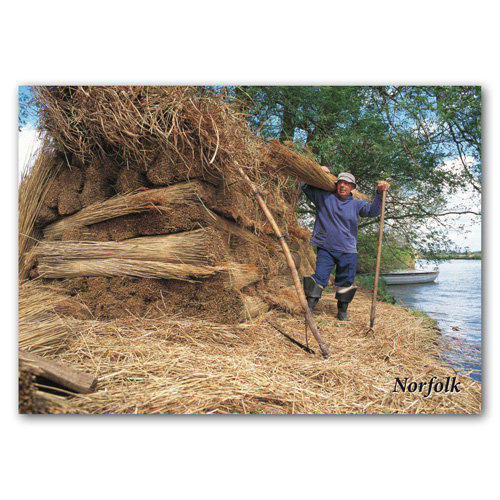 Norfolk Reed Cutter - Sold in pack (100 postcards)