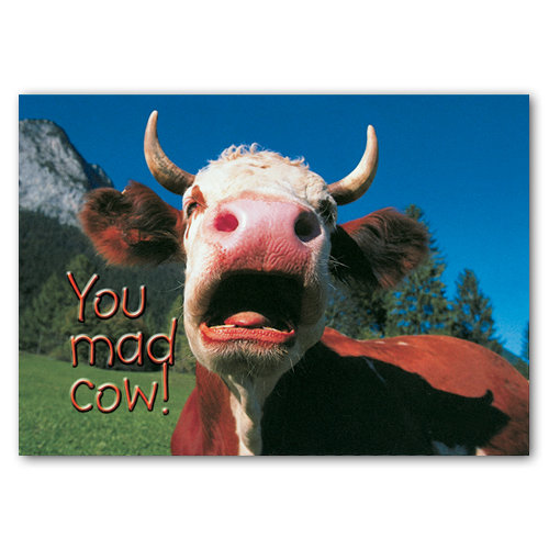 Animal Humour You Mad Cow - Sold in pack (100 postcards)