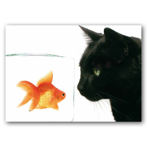 Goldfish & Cat - Sold in pack (100 postcards)