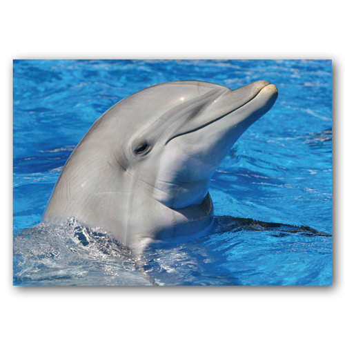 Dolphin - Sold in pack (100 postcards)