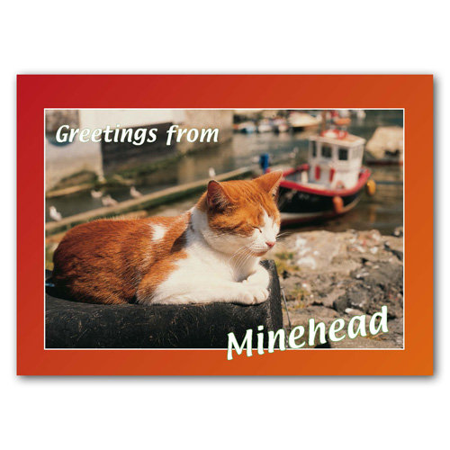 Minehead Greetings From - Cat - Sold in pack (100 postcards)